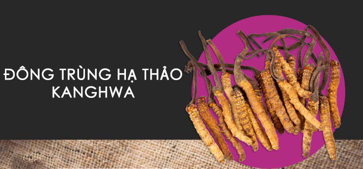 đông trùng hạ thảo Kanghwa hàn quốc